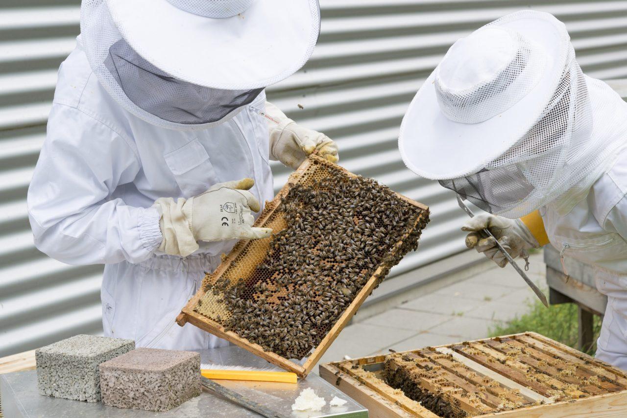 Meister in Bienenwirtschaft